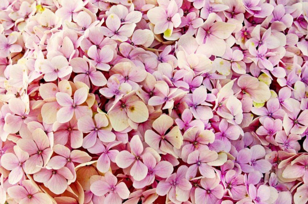 Sadzonki kwiatów wieloletnich